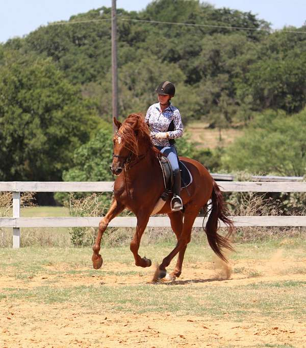 bridled-passion-farm-andalusian-horse
