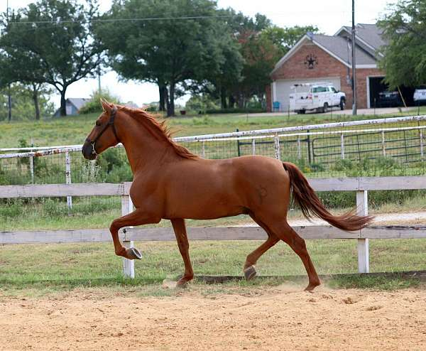 trick-horse