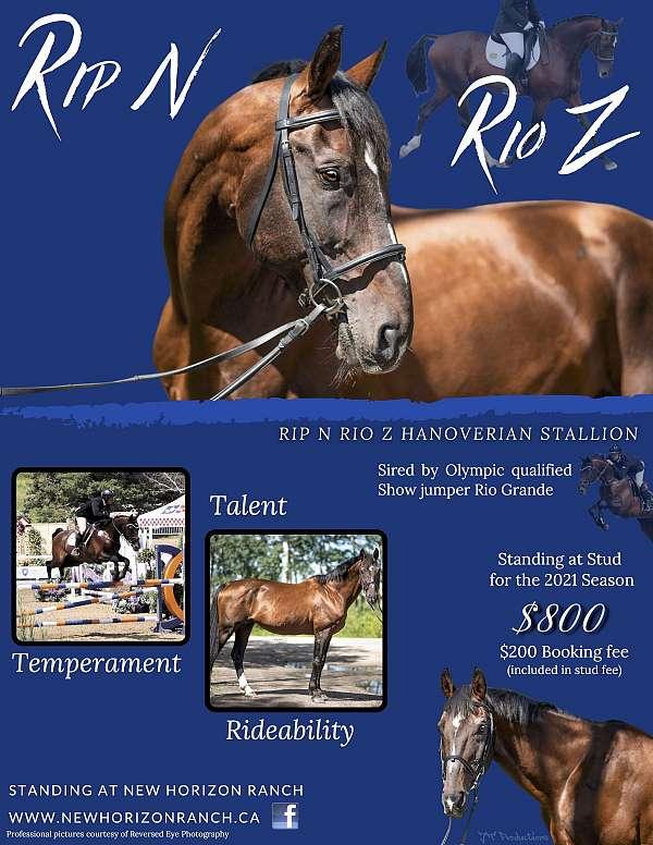 thin-stripe-stockings-horse