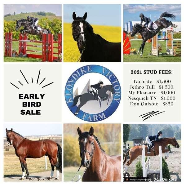 stallion-semen-warmblood-horse