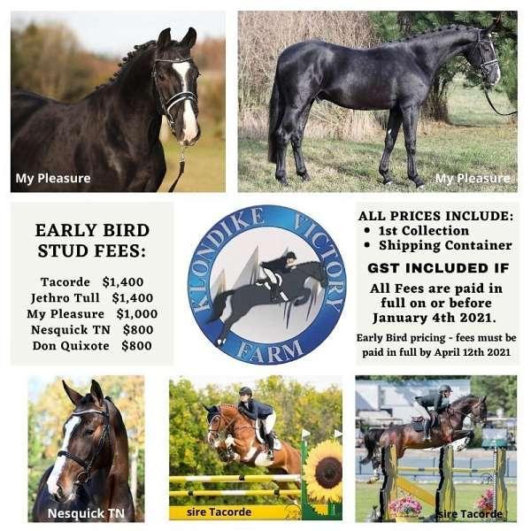 show-jumping-warmblood-horse