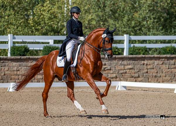 white-on-all-four-legs-horse