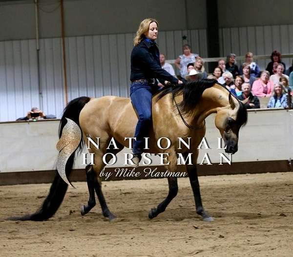 arabian-half-horse