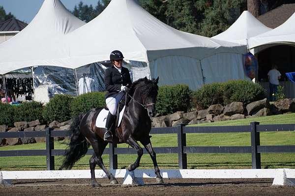 black-morgan-stallion