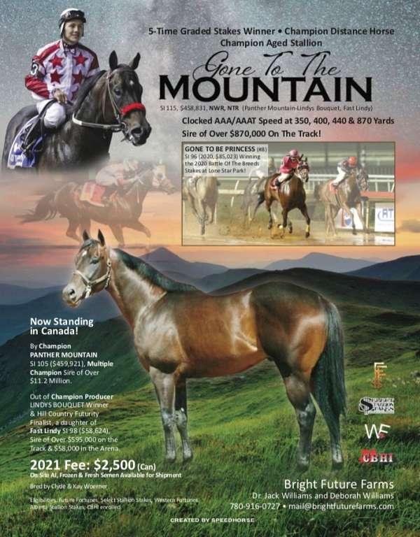 barrel-stallion-quarter-horse