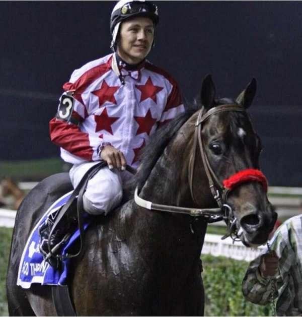 race-stallion-quarter-horse