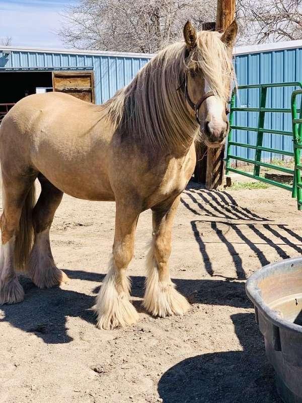 tgca-stallion