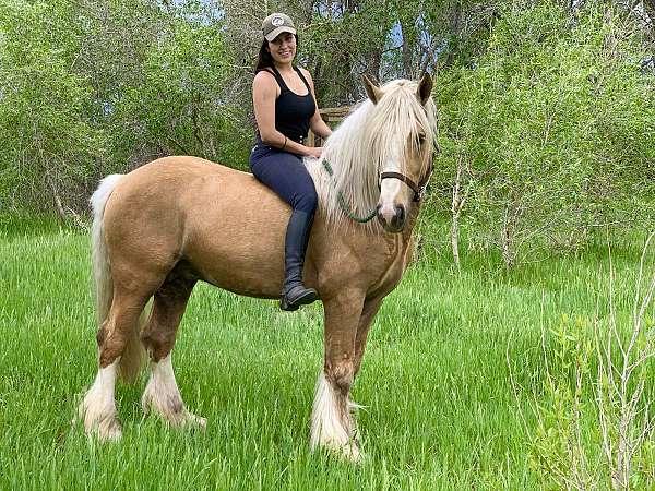 palomino-tgca-horse