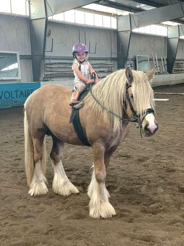 palomino-gypsy-vanner-stallion