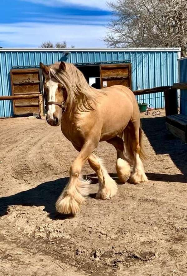 palomino-tgca-stallion