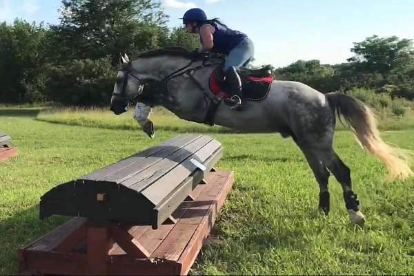 tri-color-irish-draught-horse