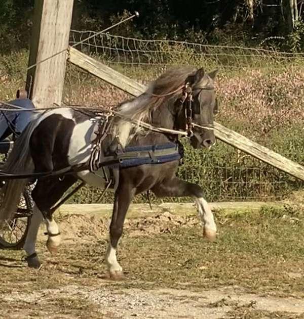 4-white-stockings-pony