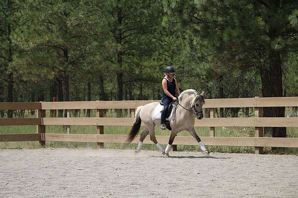 all-around-fjord-horse