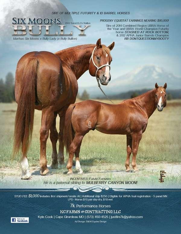 all-around-appendix-horse