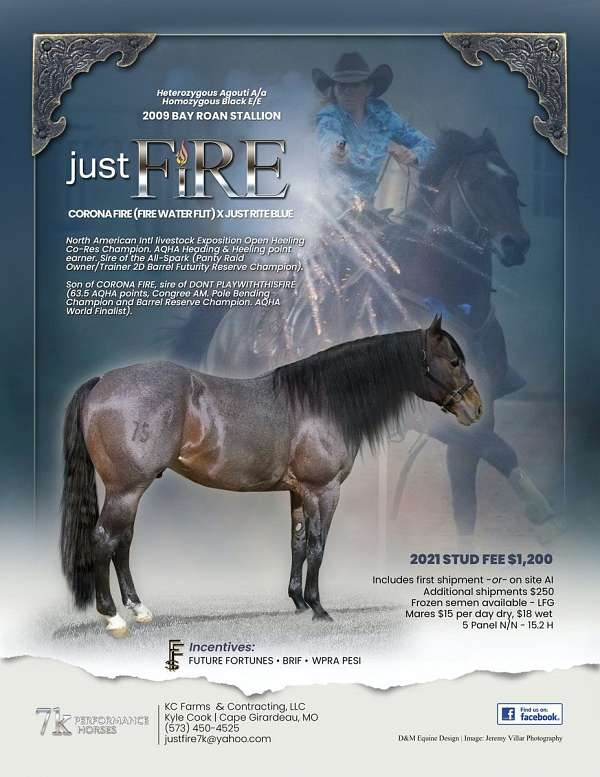 bay-roan-star-socks-horse