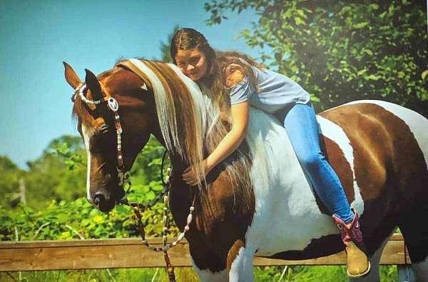stud-saddlebred-horse