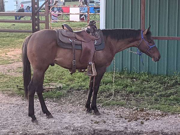dun-champion-foundation-bred-horse