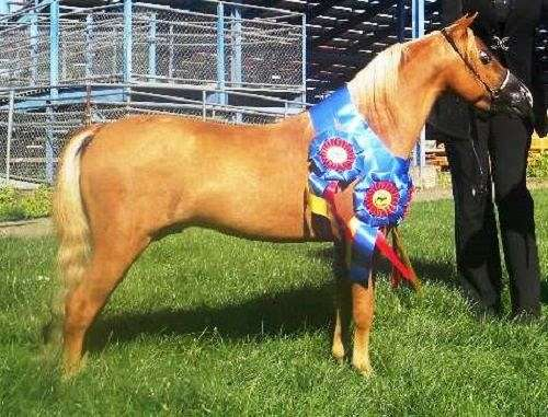 star-strip-snip-flaxen-mt-horse