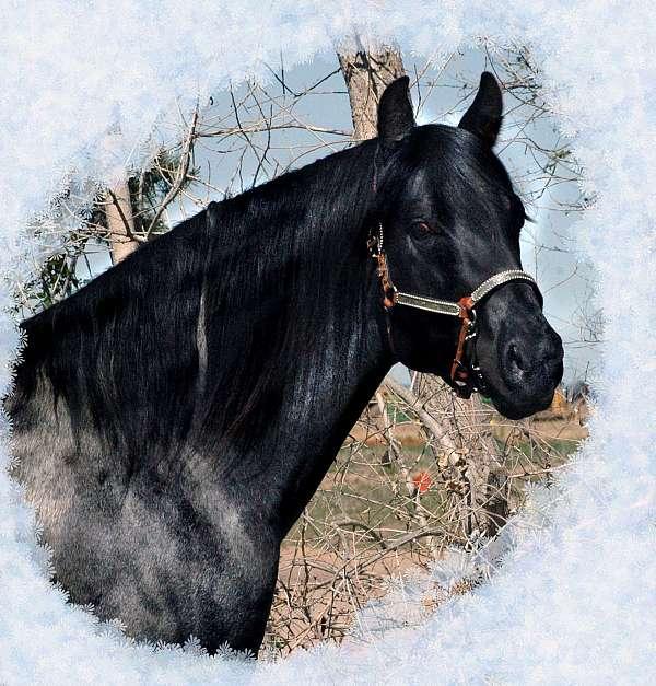 none-pony